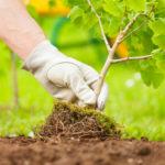 Как правильно выбирать место для посадки деревьев